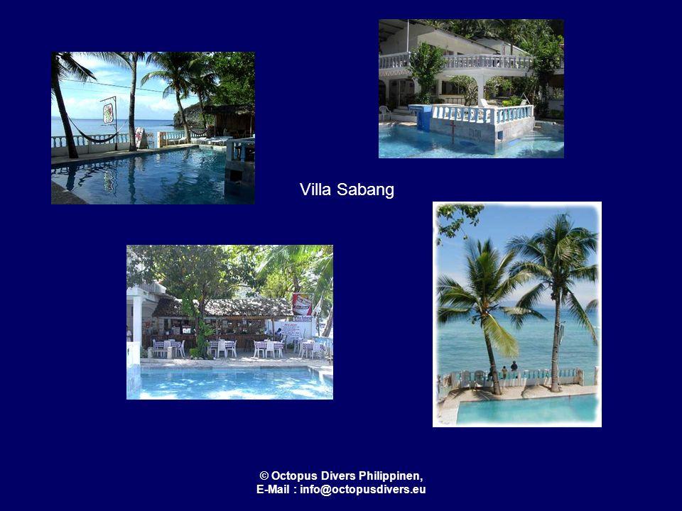 © Octopus Divers Philippinen, E-Mail : info@octopusdivers.eu Oriental Sabang Hill