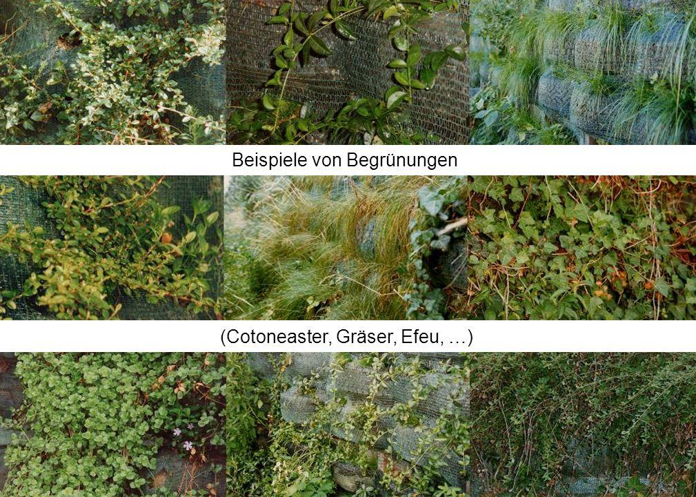 Beispiele von Begrünungen (Cotoneaster, Gräser, Efeu, …)