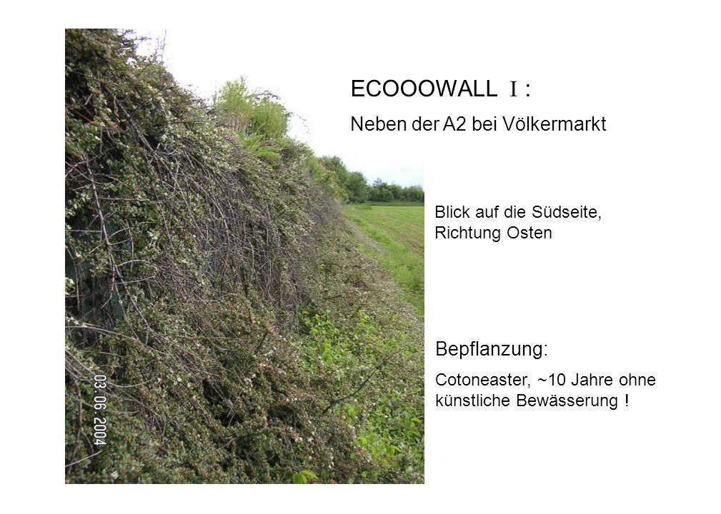 Bepflanzung: Cotoneaster, ~10 Jahre ohne künstliche Bewässerung ! ECOOOWALL I : Neben der A2 bei Völkermarkt Blick auf die Südseite, Richtung Osten