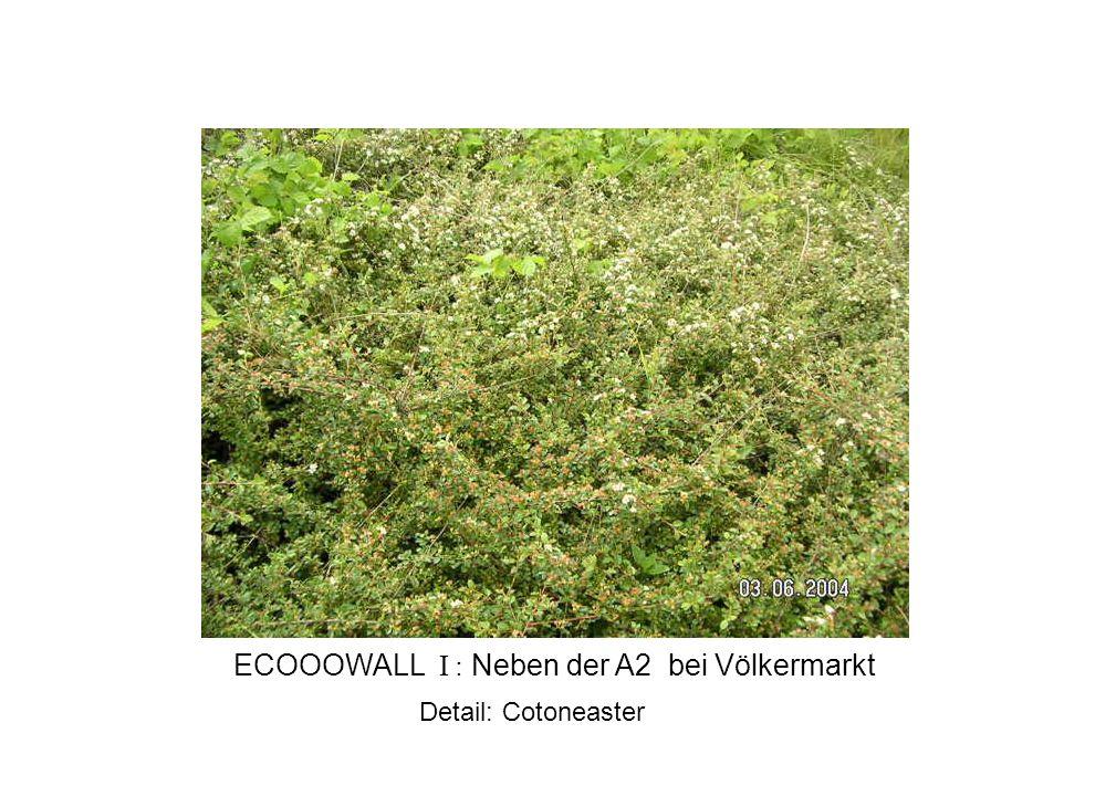 Detail: Cotoneaster ECOOOWALL I : Neben der A2 bei Völkermarkt