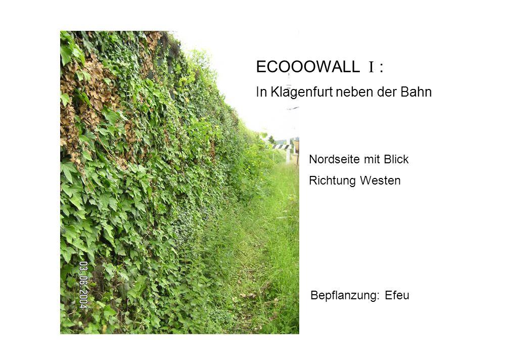 Bepflanzung: Efeu ECOOOWALL I : In Klagenfurt neben der Bahn Nordseite mit Blick Richtung Westen