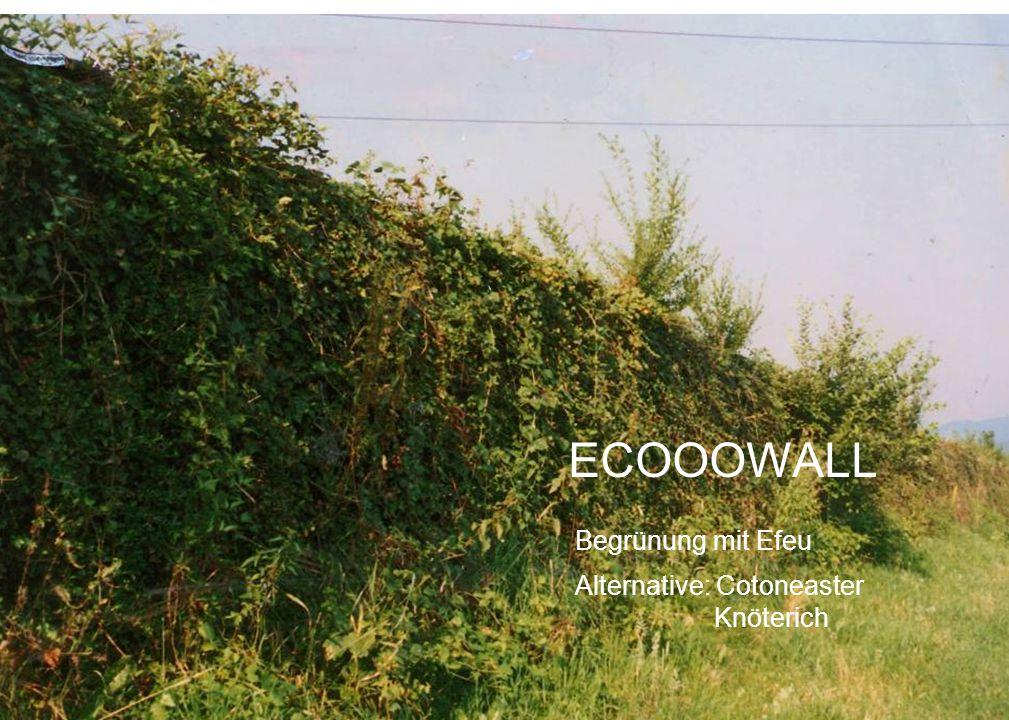 Begrünung mit Efeu Alternative: Cotoneaster Knöterich ECOOOWALL
