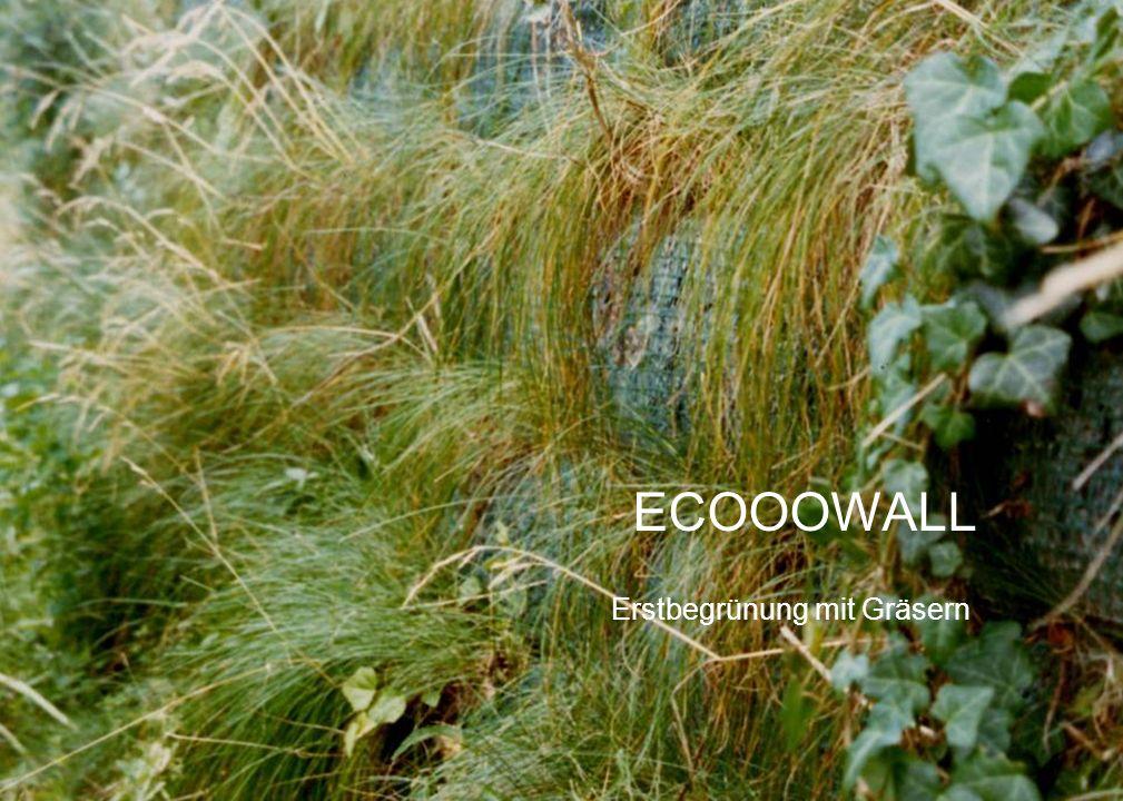 Erstbegrünung mit Gräsern ECOOOWALL