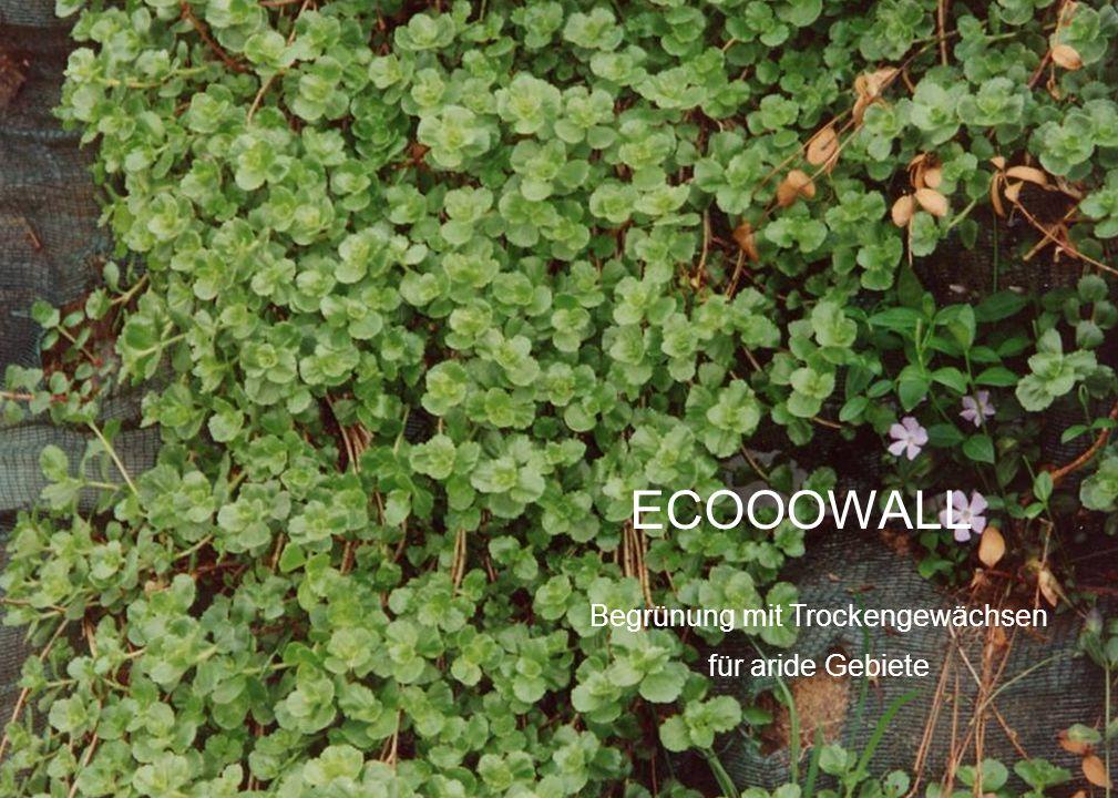 Begrünung mit Trockengewächsen für aride Gebiete ECOOOWALL
