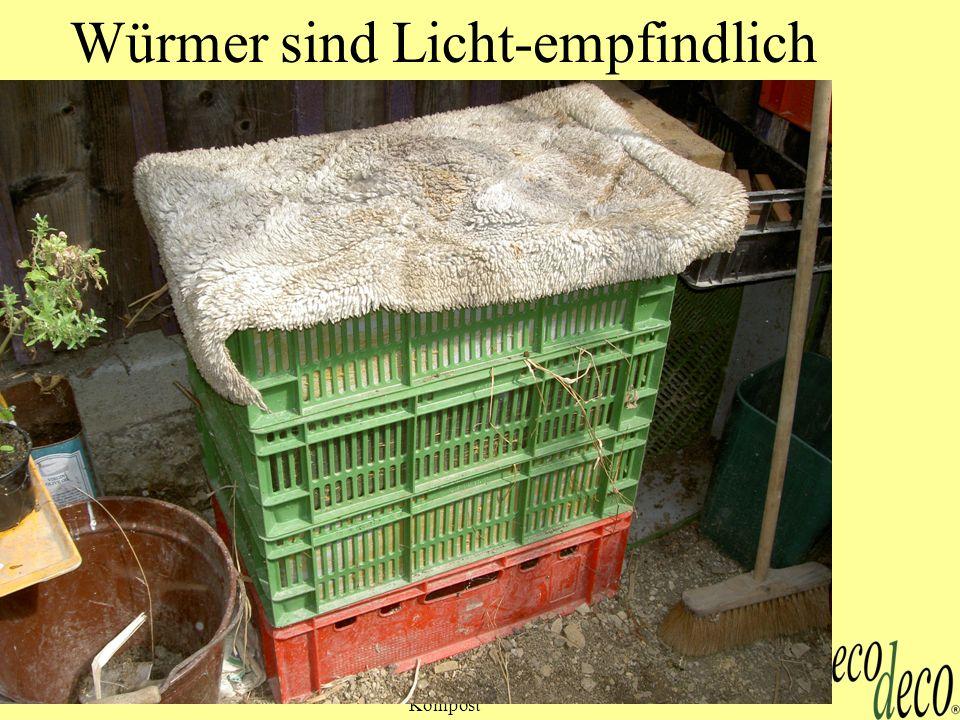 Kompost 26 Würmer sind Licht-empfindlich