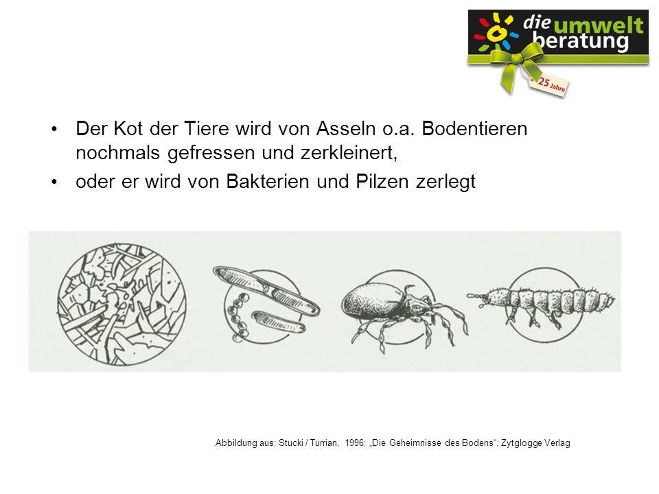 Der Kot der Tiere wird von Asseln o.a. Bodentieren nochmals gefressen und zerkleinert, oder er wird von Bakterien und Pilzen zerlegt Abbildung aus: St