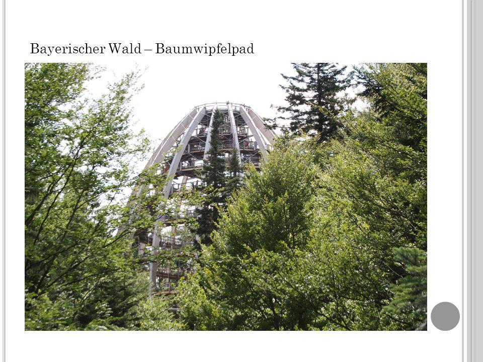 Bayerischer Wald – Baumwipfelpad