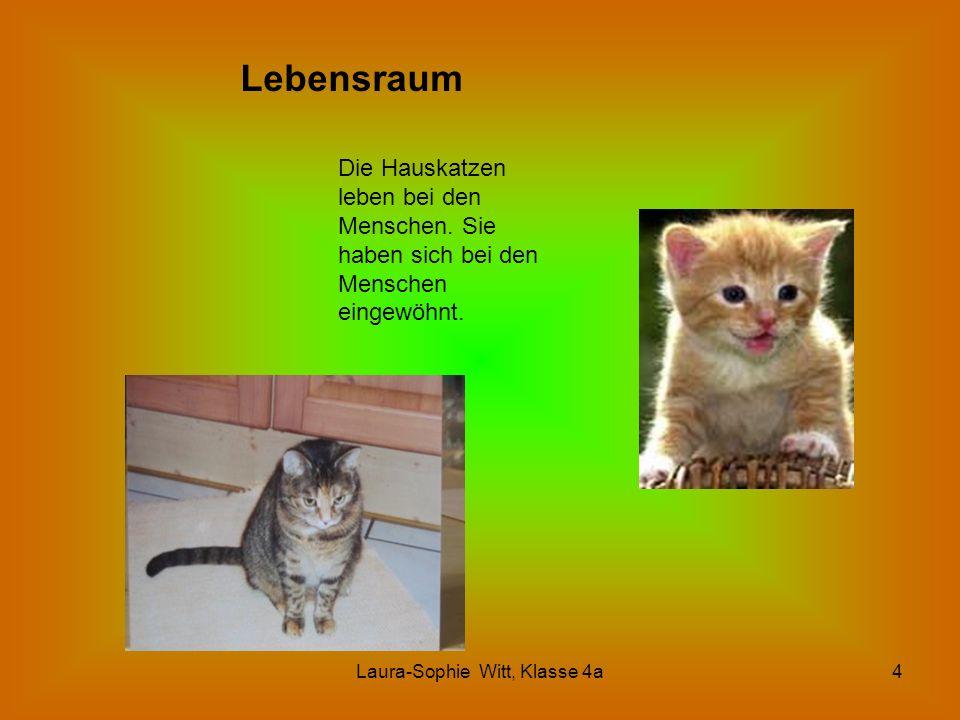 Laura-Sophie Witt, Klasse 4a4 Lebensraum Die Hauskatzen leben bei den Menschen. Sie haben sich bei den Menschen eingewöhnt.