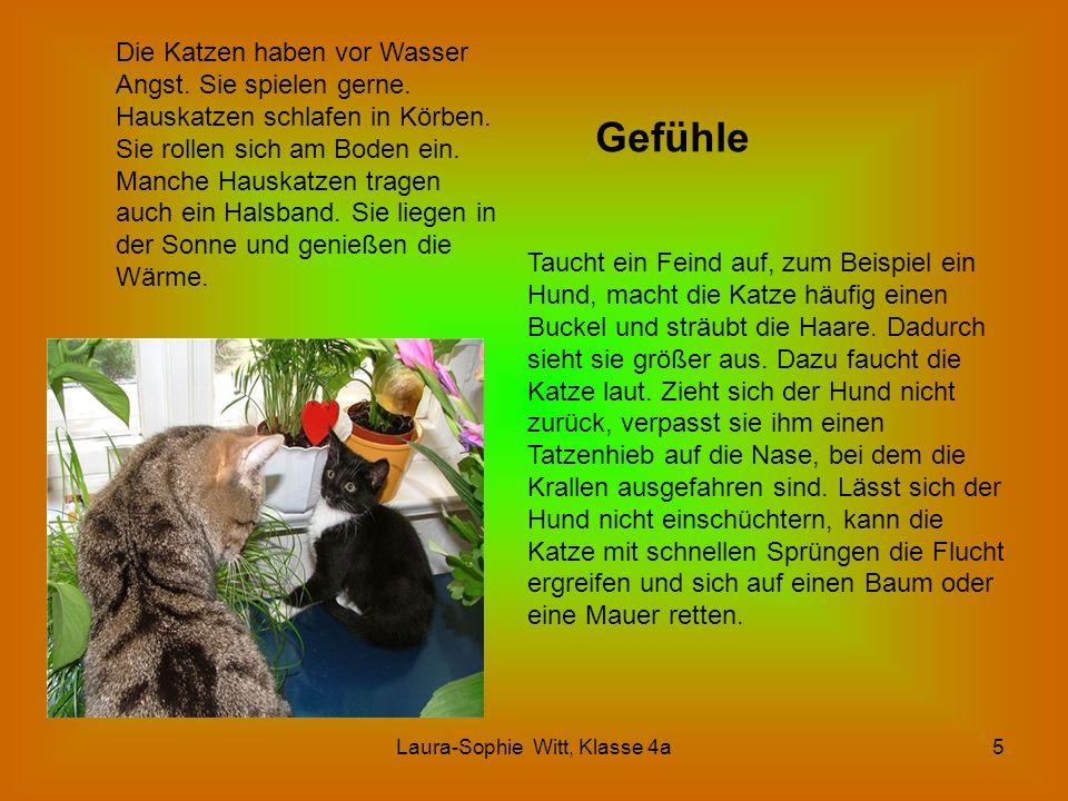 Laura-Sophie Witt, Klasse 4a5 Gefühle Die Katzen haben vor Wasser Angst. Sie spielen gerne. Hauskatzen schlafen in Körben. Sie rollen sich am Boden ei