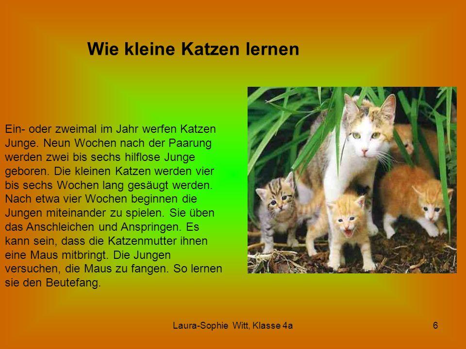 Laura-Sophie Witt, Klasse 4a6 Wie kleine Katzen lernen Ein- oder zweimal im Jahr werfen Katzen Junge. Neun Wochen nach der Paarung werden zwei bis sec