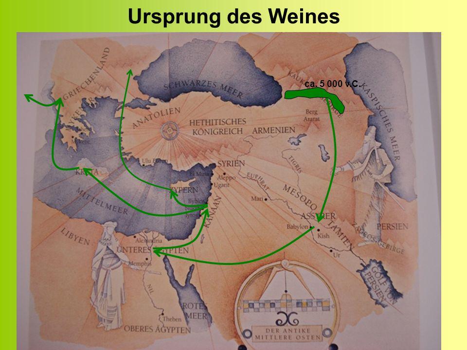 Ursprung des Weines ca. 5 000 v.C.