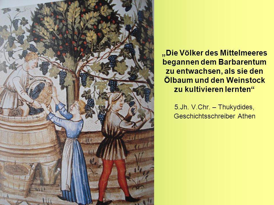 Die Völker des Mittelmeeres begannen dem Barbarentum zu entwachsen, als sie den Ölbaum und den Weinstock zu kultivieren lernten 5.Jh. V.Chr. – Thukydi