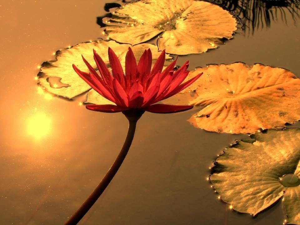 Wir halten es für selbstverständlich, dass die Sonne uns tagsüber leuchtet und wärmt, Wir halten es für selbstverständlich, dass die Sonne uns tagsüber leuchtet und wärmt, dass die Blumen für uns blühen, die Vögel für uns singen dass die Blumen für uns blühen, die Vögel für uns singen und dass wir uns in klaren Nächten über den Sternenhimmel freuen dürfen.