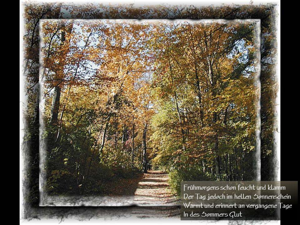 Herbsttage Es weht der Wind eine kühle Brise Die Blüten sind vergangen auf der Wiese Gras und Wald erstrahlt in bunten Farben Der Herbst malt sein bes