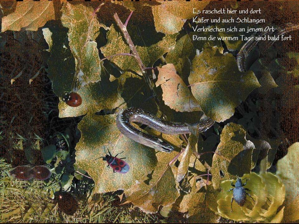 Das Eichkätzchen hortet Futter für die kalte Zeit Die Vöglein erhalten ein neues Kleid Insekten und auch anderes Getier Sucht sich sein Winterquartier