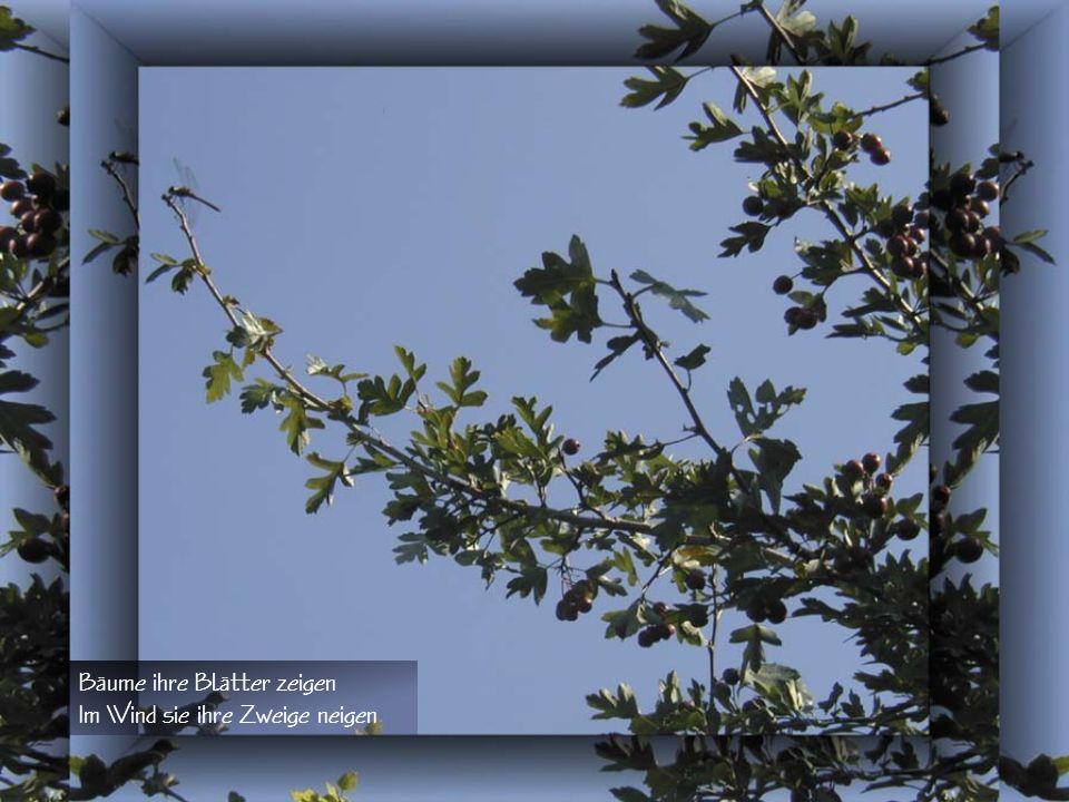 Das Blatt im Wind Sanfte Herbstzeitbrisen Streichen über Wald und Wiesen