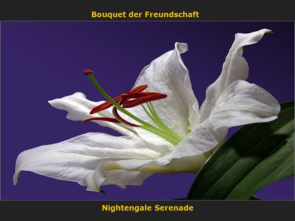 Nightengale Serenade Bouquet der Freundschaft