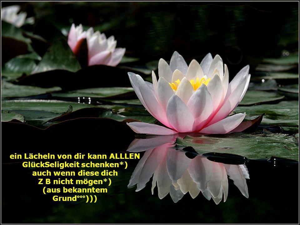 Erfolg lässt dich erblühen Freunde helfen dir durchzuhalten °°°und wenn du gefallen bist wieder auf zu stehen*)