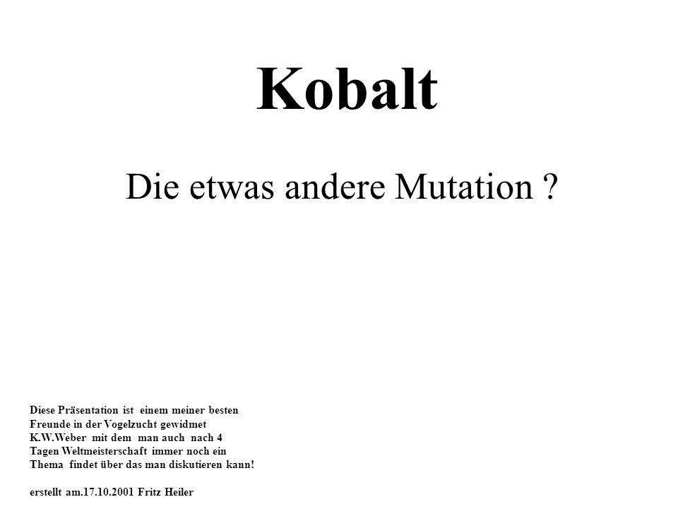 Kobalt Die etwas andere Mutation ? Diese Präsentation ist einem meiner besten Freunde in der Vogelzucht gewidmet K.W.Weber mit dem man auch nach 4 Tag