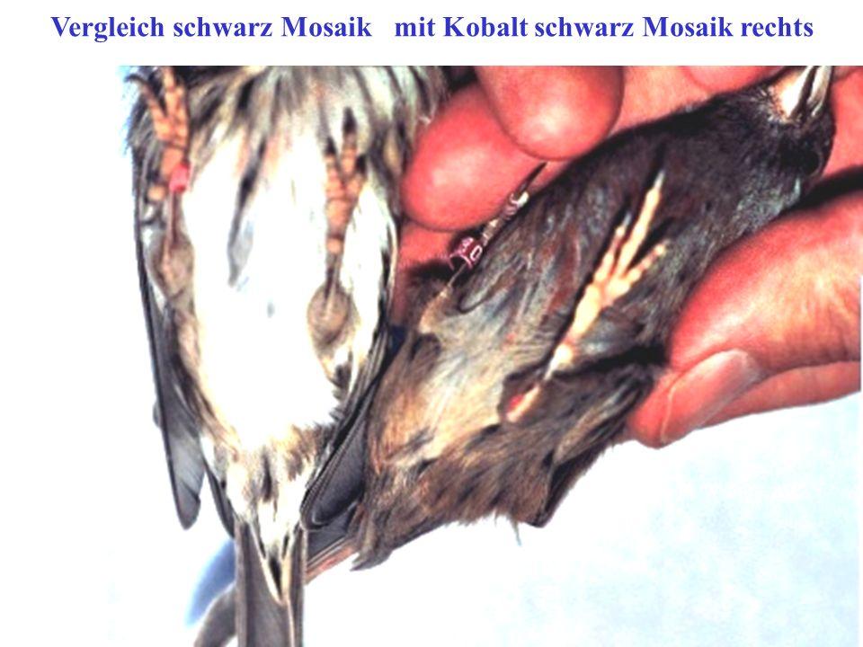 Vergleich schwarz Mosaik mit Kobalt schwarz Mosaik rechts