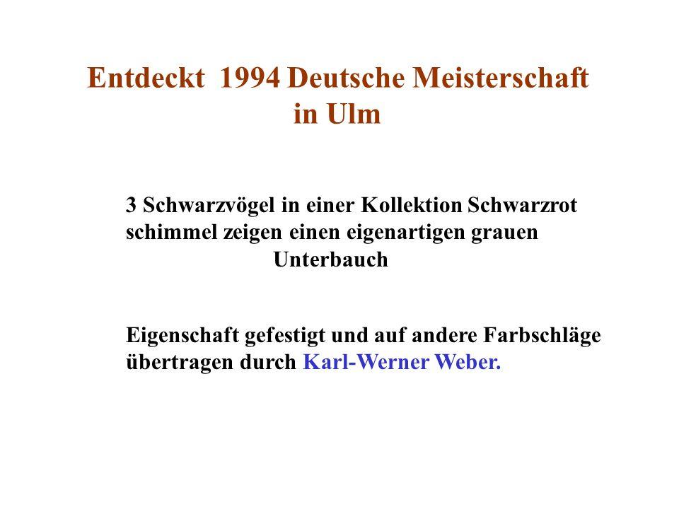 Entdeckt 1994 Deutsche Meisterschaft in Ulm 3 Schwarzvögel in einer Kollektion Schwarzrot schimmel zeigen einen eigenartigen grauen Unterbauch Eigensc