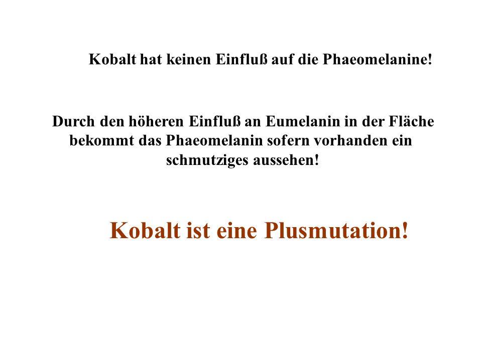 Kobalt hat keinen Einfluß auf die Phaeomelanine! Durch den höheren Einfluß an Eumelanin in der Fläche bekommt das Phaeomelanin sofern vorhanden ein sc