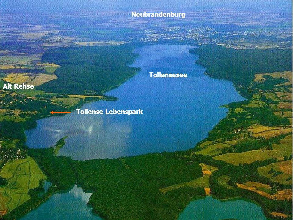 Es soll ein wissenschaftlich begleitetes Grundeinkommensmodell in Deutschland geben.