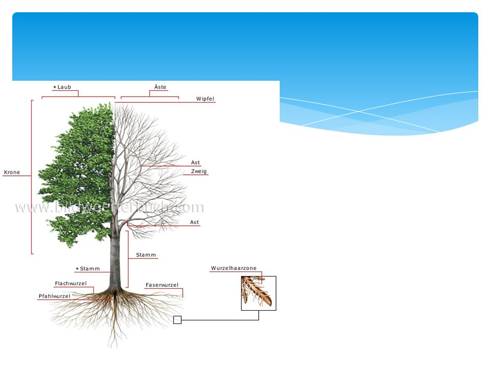 Deine Kraft, dein Wachstum, deine Standfestigkeit kommt aus dem Boden auf dem du stehst Der Baum