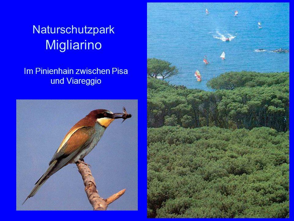 46 Naturschutzpark Migliarino Im Pinienhain zwischen Pisa und Viareggio