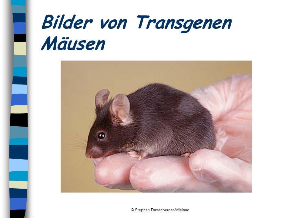 Bilder von Transgenen Mäusen