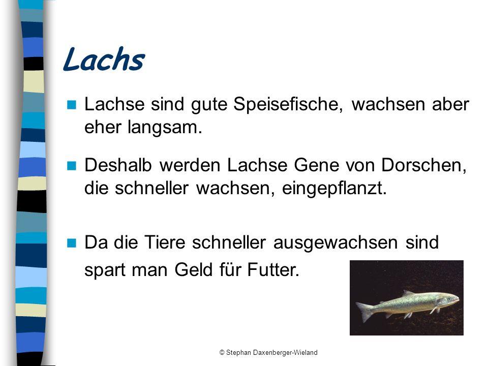 © Stephan Daxenberger-Wieland Lachs Deshalb werden Lachse Gene von Dorschen, die schneller wachsen, eingepflanzt. Lachse sind gute Speisefische, wachs