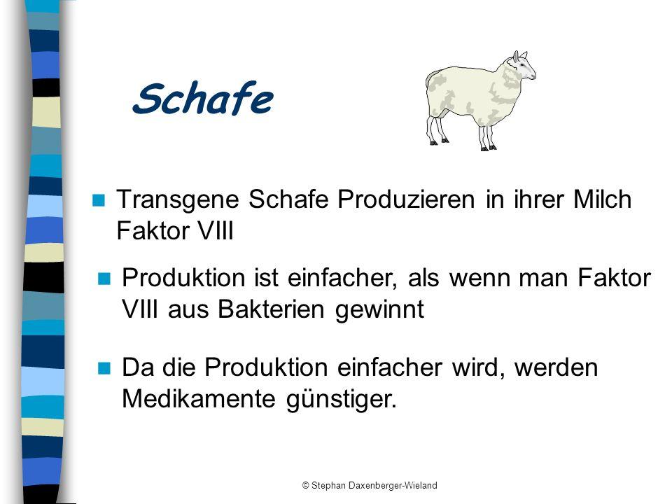 © Stephan Daxenberger-Wieland Schafe Transgene Schafe Produzieren in ihrer Milch Faktor VIII Produktion ist einfacher, als wenn man Faktor VIII aus Ba