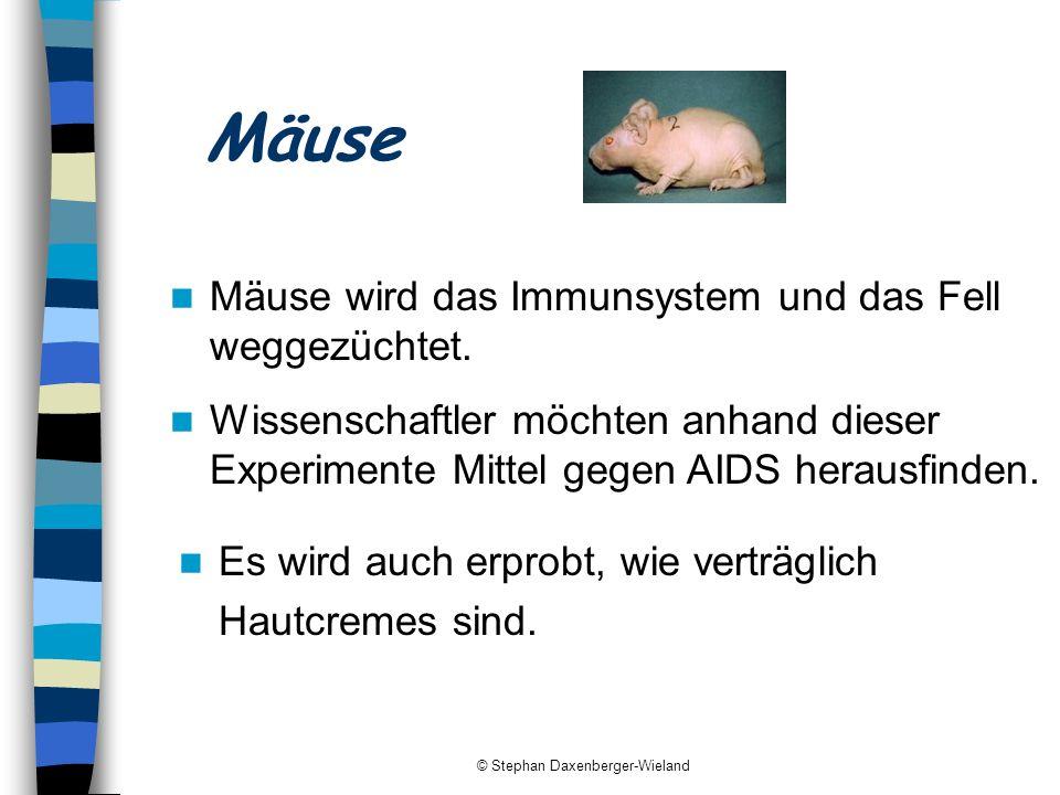 © Stephan Daxenberger-Wieland Mäuse Mäuse wird das Immunsystem und das Fell weggezüchtet. Wissenschaftler möchten anhand dieser Experimente Mittel geg
