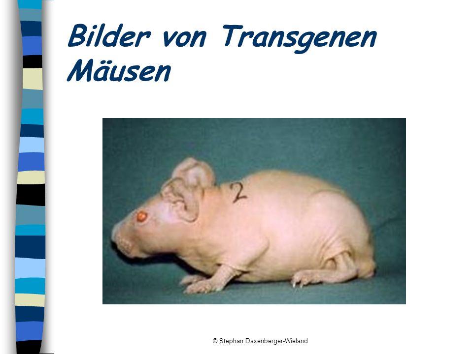 © Stephan Daxenberger-Wieland Argumente zu Genmanipulation von Tieren Pro Entwicklung von neuen Medikamenten Entwicklung von Kosmetikprodukten Contra Moralische Bedenken (z.