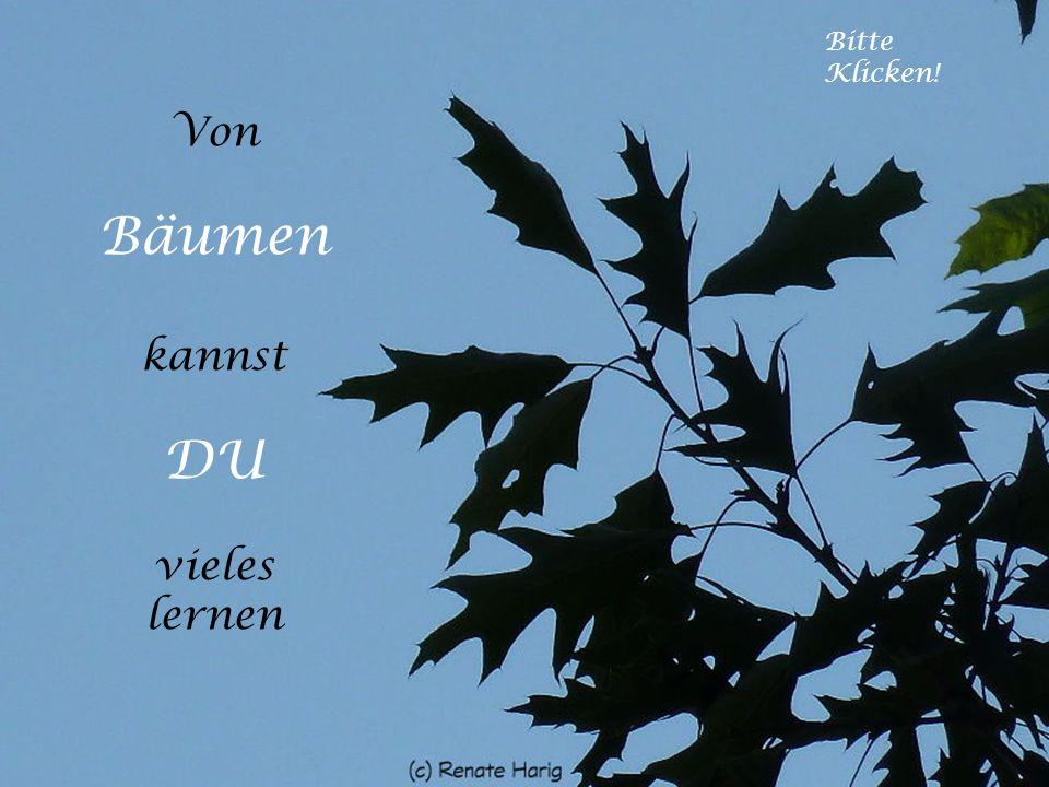Ein Baum, der fällt, macht mehr Krach als ein Wald, der wächst. Tibetanische Weisheit