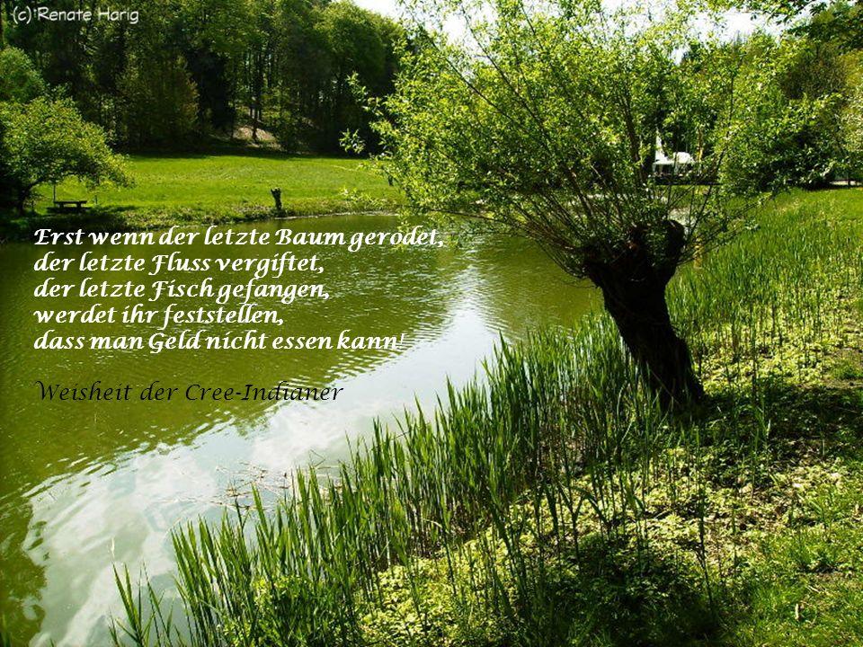 Mit Bäumen kann man wie mit Brüdern reden. Erich Kästner