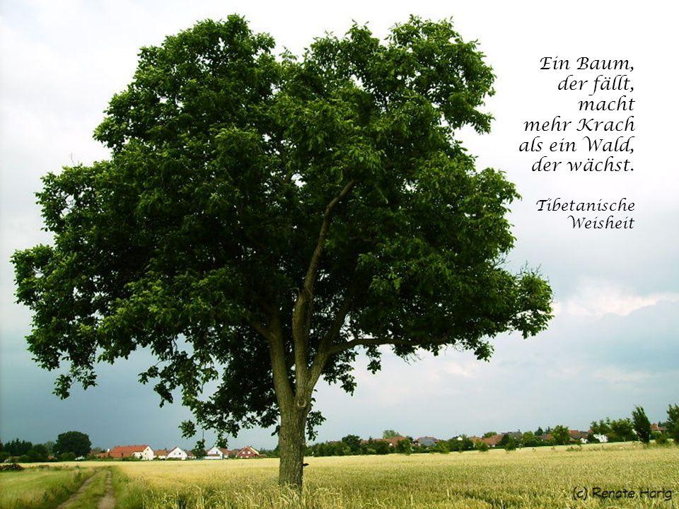 Erst wenn der letzte Baum gerodet, der letzte Fluss vergiftet, der letzte Fisch gefangen, werdet ihr feststellen, dass man Geld nicht essen kann! Weis
