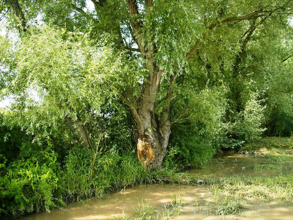 Wenn du traurig bist, suche dir einen Baum und erzähle ihm deine Sorgen. Er wird dir zuhören. Renate Harig