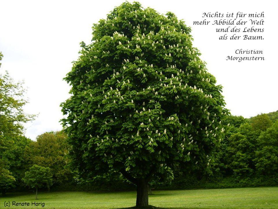 Der Friede ist der Baum, der eines langen Wachstums bedarf. Antoine des Saint-Exupéry