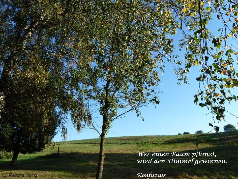 Nichts ist für mich mehr Abbild der Welt und des Lebens als der Baum. Christian Morgenstern