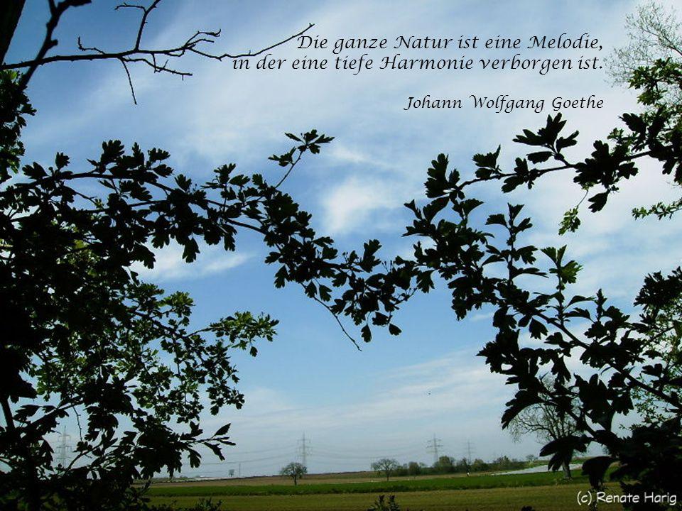 Blauer Himmel, blühende Bäume, Vogelgesang und Stille – Herz, was willst du mehr? Renate Harig