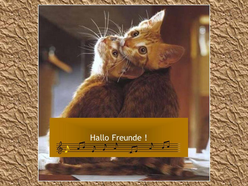 Hallo Freunde !