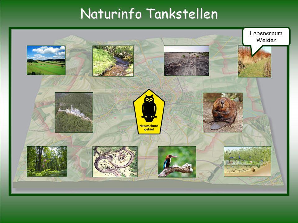 Lebensraum Weiden Naturinfo Tankstellen