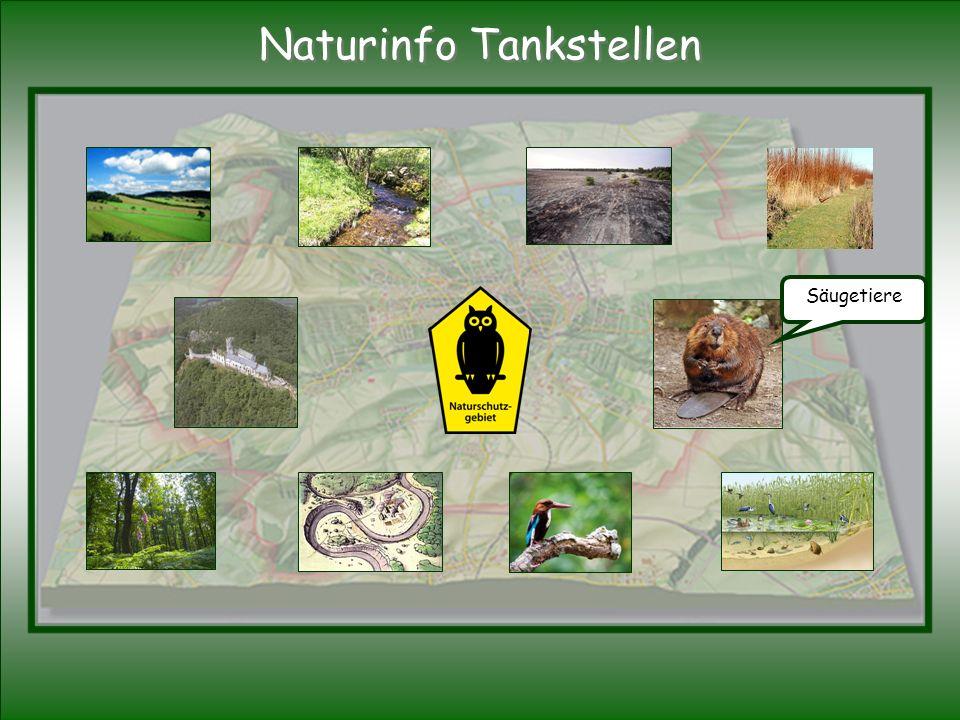 Säugetiere Naturinfo Tankstellen