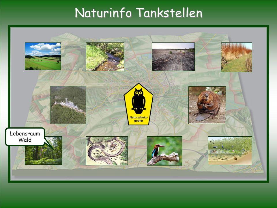Lebensraum Wald Naturinfo Tankstellen