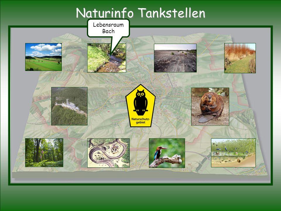 Lebensraum Bach Naturinfo Tankstellen