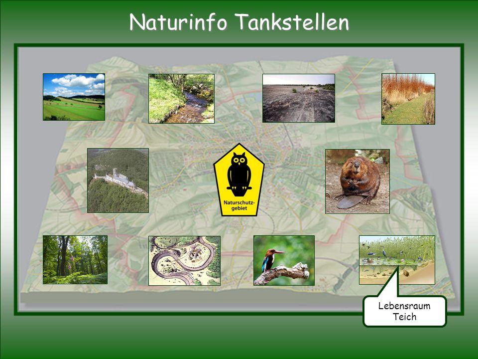 Lebensraum Teich Naturinfo Tankstellen