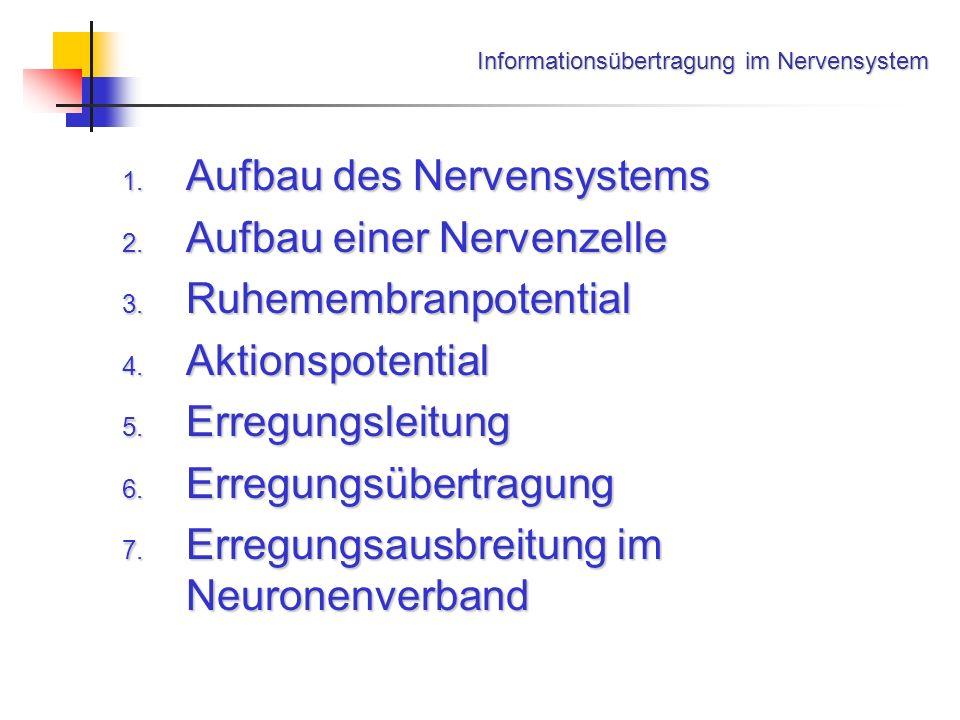 1. Aufbau des Nervensystems 2. Aufbau einer Nervenzelle 3. Ruhemembranpotential 4. Aktionspotential 5. Erregungsleitung 6. Erregungsübertragung 7. Err