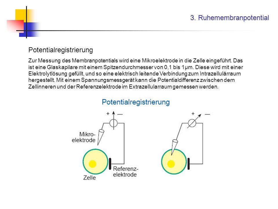3. Ruhemembranpotential Potentialregistrierung Zur Messung des Membranpotentials wird eine Mikroelektrode in die Zelle eingeführt. Das ist eine Glaska