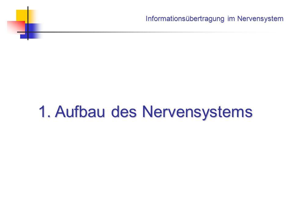Informationsübertragung im Nervensystem 1. Aufbau des Nervensystems